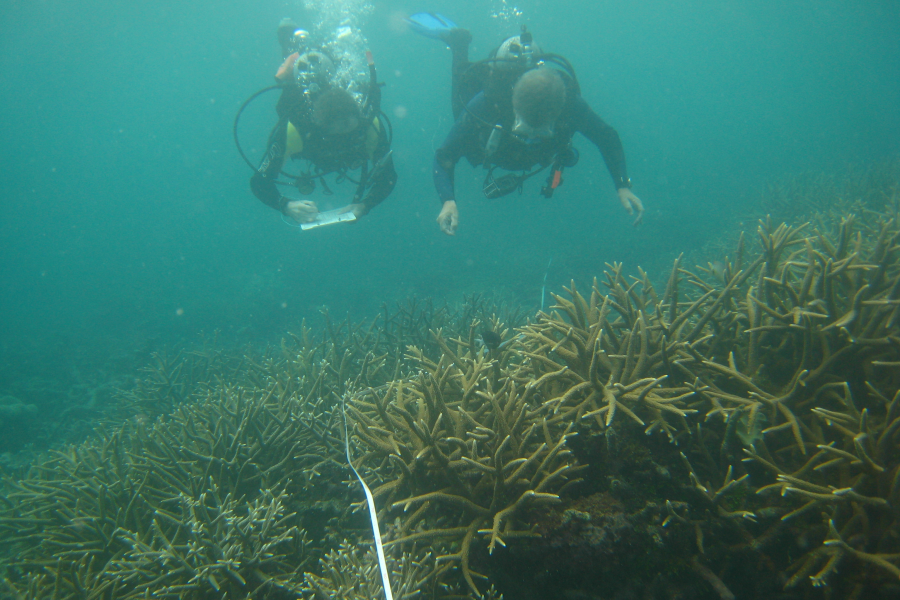 A diving buddy pair taking Reef Check Australia substrate data on the Great Barrier Reef