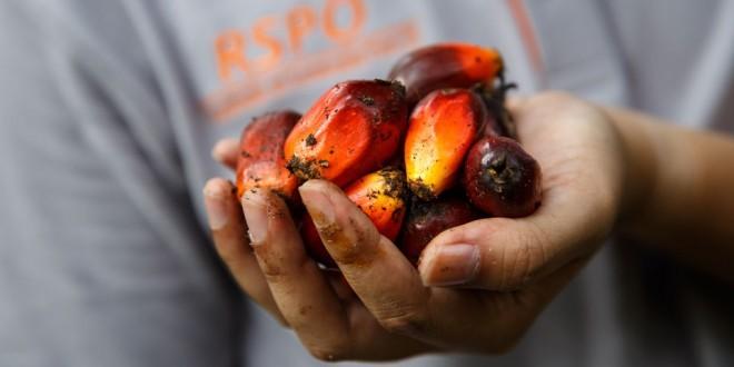 oil palm fruit - RSPO